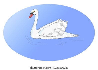 The white swan swims on the water with an elliptical background