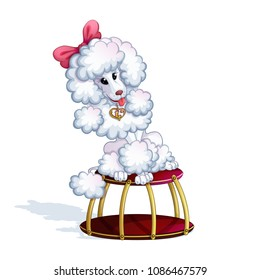 A white trained poodle girl with a pink bow and a golden pendant sits on a circus stand. Performances with animals. Circus character. Vector.
