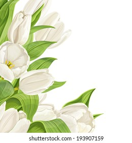 White tulips on white background. Vertical background