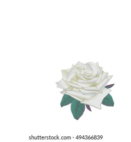 White vector rose on white background, isolated.