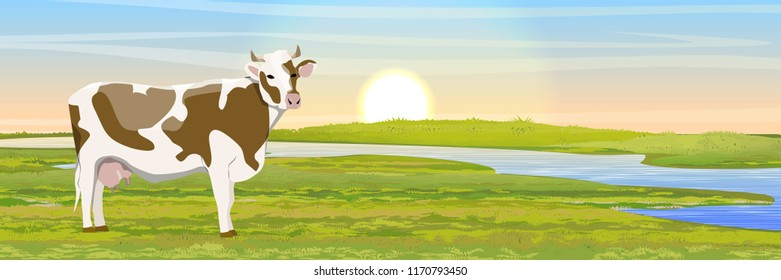 A white-brown cow in a meadow near the river. Dawn or sunset. Countryside. Vector landscape.