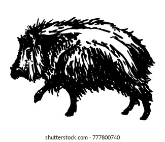 White-lipped peccary ink drawing. Vector illustration of skunk pig