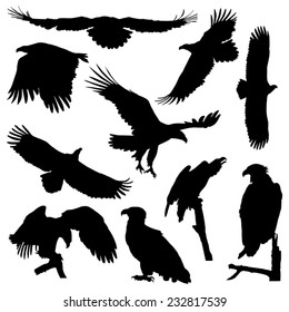 White-tailed eagle in flight silhouettes vector set