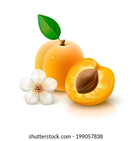 Whole apricot with leaf, half with seed and flower isolated on white background. Vector illustration.