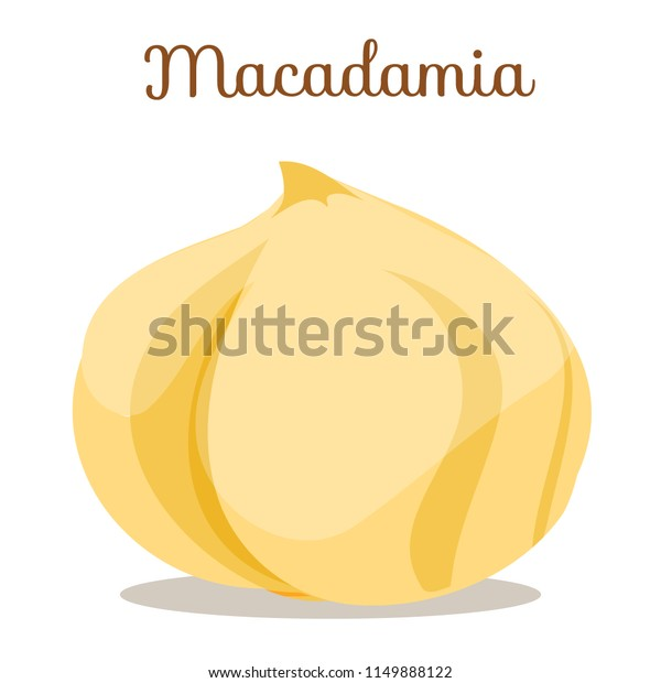 Whole Brown Macadamia Nuts Side View Stock Vector (Royalty