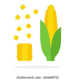 A whole cob of corn with leaves and a corn cob with separated seeds   vector flat material design isolated on white