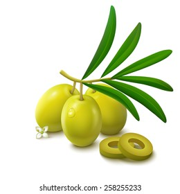 Whole green unripe olives on branch with leaves, slices and flower isolated on white background. Vector illustration.