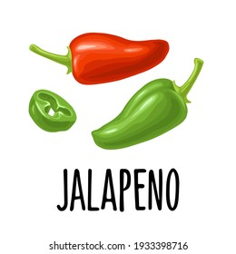 Whole and half pepper jalapeno. Vector color illustration for menu, poster, label. Isolated on white background. Hand drawn design element