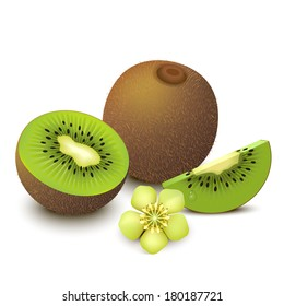 Whole kiwi fruit with half, sliced segment and flower isolated on white background. Vector illustration.