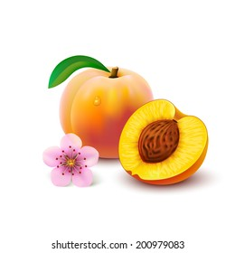 Whole peach with leaf, half with seed and flower isolated on white background. Vector illustration.