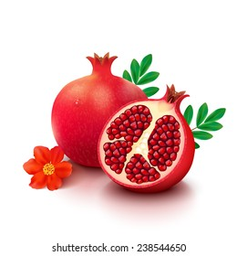 Whole pomegranate with half, flower and leaves isolated on white background. Vector illustration.