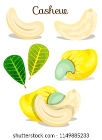 Whole,peeled,sliced,ripe colourful cashew nut set.Nut Fruit Cashew. Healthy organic snacks food. Cashews nuts. vegan plant. Modern flat cartoon vector illustration on white. Yellow fruit with leaves.