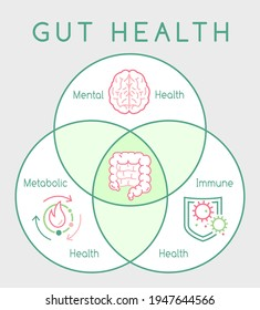 Why gut health matters. Vertical poster. Medical infographic. Digestion is important. Stomach function. Editable vector illustration in modern outline style. Healthcare and scientific concept