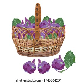 Wicker basket full of fresh kohlrabi, vector illustration isolated on white background. Healthy organic food. Turnip cabbage, natural farming vegetables.