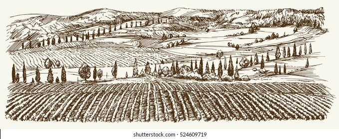 Breite Sicht auf den Weinberg. Das Panorama der Weinlandschaft. Handgezeichnete Illustration.