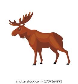 Wild animal moose on a white background, vector illustration