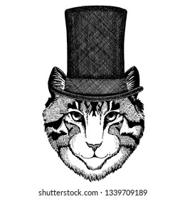Wild animal wearing top hat, cylinder. Hipster cat