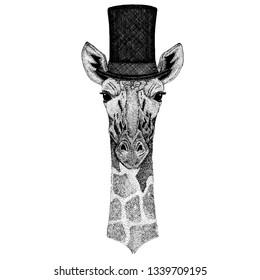 Wild animal wearing top hat, cylinder. Hipster camelopard, giraffe