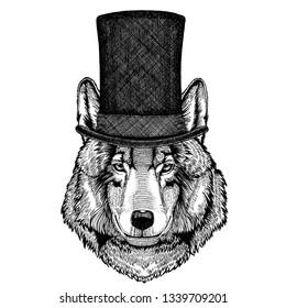 Wild animal wearing top hat, cylinder. Hipster wolf