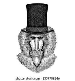 Wild animal wearing top hat, cylinder. Hipster monkey, baboon, dog-ape, ape