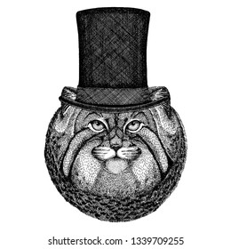 Wild animal wearing top hat, cylinder. Hipster manul, cat