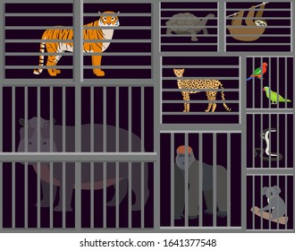 Wild animals beasts captured in cages vector illustration. Sad animals tiger, hippopotamus, cheetah, gorilla, sloth, turtle, koala, cobra snake, parrots birds caged in zoo cells.