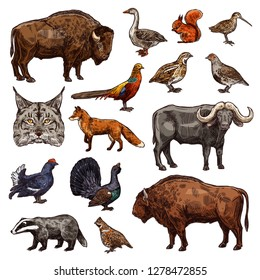 Wild animals and birds icons of hunting sport vector theme. African buffalo, bison and forest fox, pheasant, goose and quail, ox, grouse and lynx, squirrel, badger, partridge and woodcock sketches