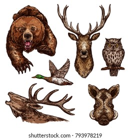 Wild animals and birds sketch icons. Vector isolated set of grizzly bear, elk antlers or deer and owl with duck, aper or hog boar for hunting open season or wildlife zoo and hunt adventure