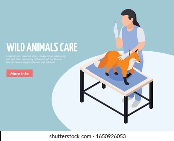 Wild animals exotic pets veterinary care isometric web landing page banner with vet treating fox vector illustration