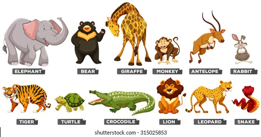 Wild animals in many types illustration