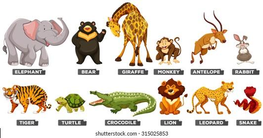 wild animal images stock photos vectors shutterstock