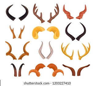 Wild animals sharp horns in pairs, hunting trophy set. Curved, pointed from heads of cattle, sheep, goats, giraffes. Vector flat style cartoon illustration isolated on white background