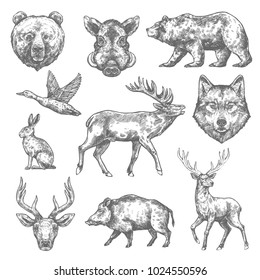 Wild animals sketch icons of grizzly bear, aper hog or boar and elk, rabbit hare or duck and wolf or deer. Vector isolated animals for hunting club, zoo wildlife or open season hunt adventure design
