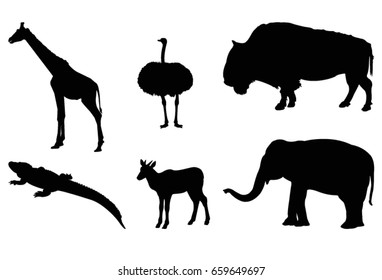 Wild animals, vector illustration