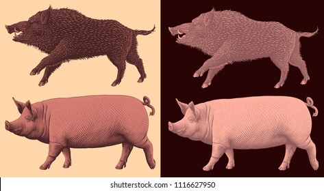Wild boar and domestic pig. Design set. Hand drawn engraving. Editable vector vintage illustration. Isolated on light and dark background. 8 EPS