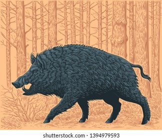 Wild boar in the forest. Hand drawn engraving. Editable vector vintage illustration. Isolated on color background. 8 EPS