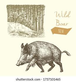 Wild boar and forest, vintage engraved illustration