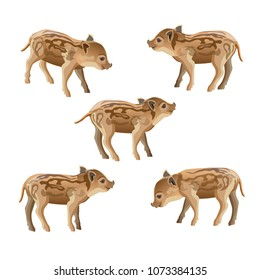 Wild boar piglet set. Vector illustration isolated on white background
