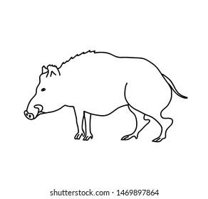 Wild boar vector illustration. Outline drawing of a hog.