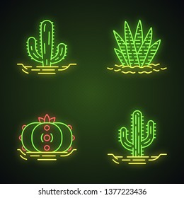 Wild cactuses in ground neon light icons set. Tropical succulents. Spiny plants. Mexican giant, saguaro, peyote, zebra cactus. Glowing signs. Vector isolated illustrations