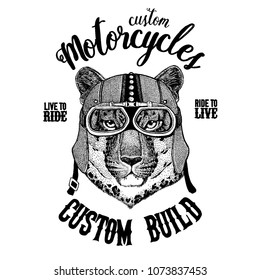 Wild cat Leopard Cat-o'-mountain Panther Biker, motorcycle animal. Hand drawn image for tattoo, emblem, badge, logo, patch, t-shirt