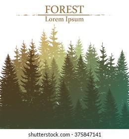 Wild coniferous forest background