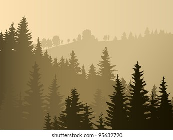 Wild coniferous wood in a morning fog.