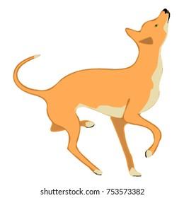 Wild dog illustration