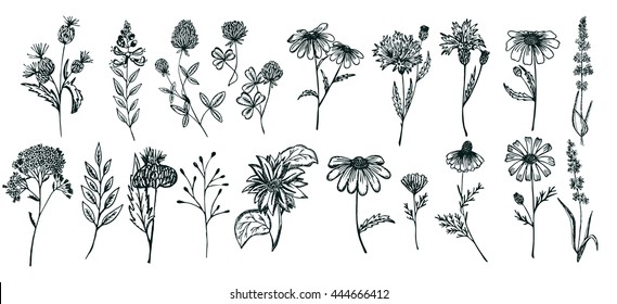 Wild Flowers collection.Set of Wild Flowers isolated on the white background.Botanical plant.