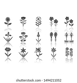 Wild flowers drop shadow black glyph icons set. Spring blossom. California wildflowers, weed with names. Garden blooming plants inflorescences. Botanical bundle. Isolated vector illustrations