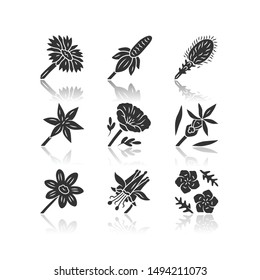 Wild flowers drop shadow black glyph icons set. Mexican hat, liatris, common star lily, poppy, calypso orchid, coreopsis, crimson columbine, blue flax, blanket flower. Isolated vector illustrations