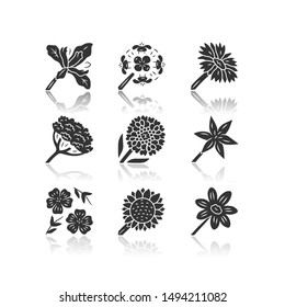 Wild flowers drop shadow black glyph icons set. Douglas iris, franciscan wallflower, cow parsnip, candytuft, common star lily, blue flax, helianthus, coreopsis. Isolated vector illustrations