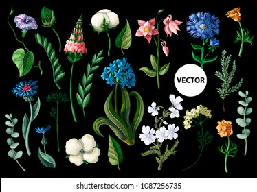 Wild flowers isolated on a black background. Vector illustration.