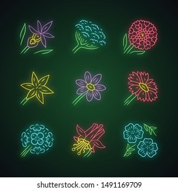 Wild flowers neon light icons set. Orchid, cow parsnip, candytuft, star lily, coreopsis, franciscan wallflower, crimson columbine, blue flax, blanket flower. Glowing vector isolated illustrations